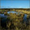 Dune reservoir (ESOX LUCIUS) Tags: blue me water ilovenature taco ponds naturereservedekwadehoek duinengoereeenkwadehoek