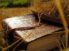 el mito de la realidad (wakalani) Tags: summer sunlight painting book countryside olympus vistas bitacora hierba wakalani lovephotography hierbaseca masvistas utatafeature