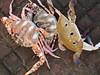 Ferry Wharf 060 (Sanjay Shetty) Tags: ferry wharf crabs bhaucha dhakka