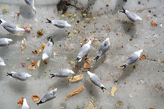 Hunger is for the Birds (Sol Lang) Tags: food seagulls ice birds gulls sollang netneutrality utatafeature heutekunst