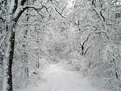 Silent Snowy Path (crbassett) Tags: new schnee trees snow minnesota geotagged outdoors midwest snowfall ulm newulm top500 flandraustatepark