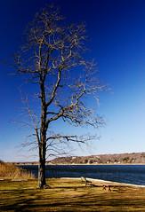 Stratospheric tree (Ryan Brenizer) Tags: blue sky newyork tree topf25 water march nikon scenic 2006 noflash 1755mmf28g d200 polarizer stratosphere coldspringharbor cshl benchlongisland