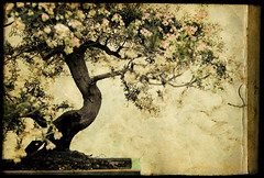 Your moment of zen (IrenaS) Tags: flower tree 20d texture photoshop canon paper book miniature antique painted zen bonsai aged mutedcolors artlibre impressedbeauty frhwofavs