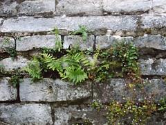 14.07.2004-image009 (a13x4ndr) Tags: old bastion