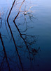 "blue silouette (""  Hasan  "") Tags: blue pakistan reflection tree nature water canon march outdoor branches karachi vignette safaripark hasan a620"