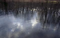 Ripples (bbikkerr1) Tags: deleteme5 trees ohio deleteme8 deleteme reflection deleteme2 deleteme3 deleteme4 deleteme6 deleteme9 deleteme7 water daylight deleteme10 toledo ripples oakopeningsmetropark