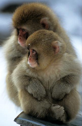 猿 無料写真素材