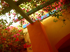 A garden view: Sheraton Miramar Resort El Gouna, Hurghada - Egypt (mnadi) Tags: flowers sunset red summer sky orange holiday flower color colour garden warm colours outdoor redsea curves egypt sunny resort bougainvillea arabic clear gouna egyptian styles sheraton ethnic spa miramar hurghada michaelgraves bedouin  nubian elgouna bougainvilleas