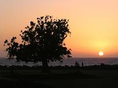Sunset on the western sea (I) (tomato umlaut) Tags: sunset sea india tree topv111 topv333 rocks bombay mumbai notpicked topvaa top20india lovephotography