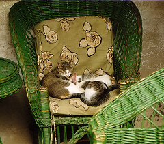 Afternoon relaxation (YuvalH) Tags: pet cats pets cute nature animals cat relax chair couple sleep pussy romania  pussycat   sitiing