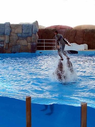 Shooter Dolphins and the Ball Man! -- dolphin water sea fish iran iranian animal persian persia ایران صابر حامد