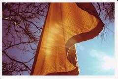 gates8 (thearnoswimmer) Tags: 2005 nyc trees newyork film crossprocessed centralpark saffron christo thegates gatesmemory