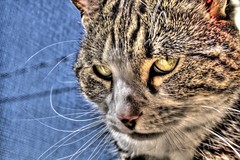 kittie.jpg (Lawrence Whittemore) Tags: pet animals cat lawrence w kitty kittie lawrencew