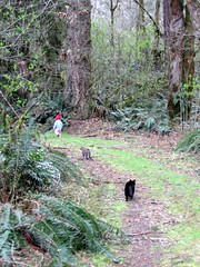 One of My Favorite Pictures - Anna Leigh, Muffin and Thirteen in the Woods (Pixel Packing Mama) Tags: cats wonder tl lovely1 great grandchildren granddaughter frombehind mycats grandchild littlepeople grandandotherchildren catsandkittensset ilovemycat furryfriday toddlers capture nuggets cutecat ort cutekitten muffinthecat catlovers babiestoddlers femalephotographers v1000 petparade beautifulcats happycats familyfurrythingsorboth pixelpackingmama meowscollector catssmalltobig dorothydelinaporter worldsfavorite everybodywantstobeacat herdingcats thirteenthecat hatsregrettableandotherwise melfanclub welovelatte wonderfulunlimited makingsofafairytale cc1000 catcentury catscalledmuffin smallfiguresinavastexpanse bonzag favoritedpixset cat1000 theredmakesitwithoutdominating mostinterestingaccordingtoflickralgorithmset kittycatpeople greatpixgallery10favespool familypicskidpics outdoorfamilyfriendsfun favorites10pool ceruleanthecat~fanclub childrenlostinthourhgt reallyunlimitedpool hatsregrettableandotherwisepool views1000andupdomesticcatsonlypool uploadedfirsthalfof2006set cbatdef update4sure defdefdef update4sureset keptintoddlerspool051110 pixelpackingmama~prayforkyronhorman oversixmillionaggregateviews over430000photostreamviews