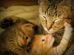 More family love (fofurasfelinas) Tags: family cats baby topf25 cat kitten gatos fofurasfelinas catphotography felinephotography gianeportal furryfelines fotografiadegatos fotografiafelina