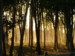 Busque encantado (Libertinus) Tags: light tree luz backlight contraluz arbol lafotodelasemana bosque s5000 lfscontraluces contraliz