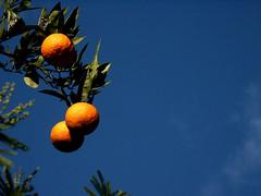 sinaasappels (wester) Tags: blue sky italy orange color topv111 fruit 510fav napoli naples oranges 110fav italië napels