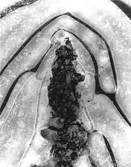 Prayful hands. (c00lsh0ts) Tags: winter bw abstract ice design hands rocks stones prayer fingers pebble lookingforasign