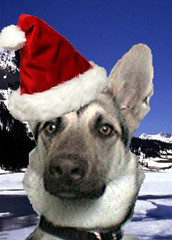 Zaide Christmas