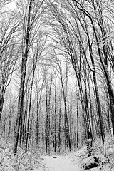 Winter Wonderland 4 (twistedbydesign) Tags: trees bw snow ontario home wet rain fog forest blackwhite nikon december d70s twistedbydesign patrick patryk adamczyk mansfield polanaranch nikonstunninggallery