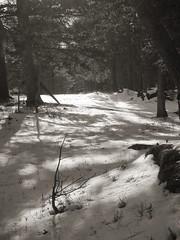 Shadows and Ice (MaureenShaughnessy) Tags: winter bw snow cold forest montana december seasons coldseason seasonalcolor newwestnet lightisalive waterisalive christmasadvent seasonalrhythmslight seasonalrhythmscolorwinter seasonalrhythmswinter