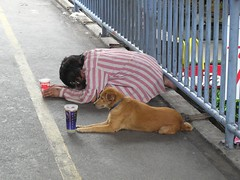 ...and I've been working like a dog (Haggai Shachar) Tags: asia thailand dog money beg beggar topv50