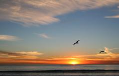 worlds best climate (sosidesc) Tags: sunsets sun sunset sol sky sanclemente orange ocean nuvem natureza gold fun cey california beautiful beach seagull bird deleteit saveit deleteit2forclickbeetle deleteit3 deleteit4 deleteit5 saveit2 saveit3 deleteit6 saveit4 saveit5 deleteit7 deleteit8 saveit6 saveit7 saveit8 saveit9 saveit10 savedbythedmusunscapesgroup