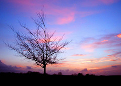 Last Twilight of 2005 (Trapac) Tags: pink blue winter sunset england sky tree silhouette clouds downs bristol geotagged searchthebest violet newyearseve thedowns durdhamdown bristoldowns geo:lat=51471351 geo:lon=262569 passionatelypinkforthecure flickrcollectionongetty