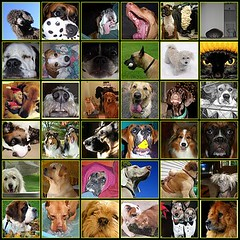 Some of my favorite flickr dogs! by JAEbugs