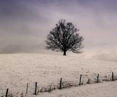 Lone Tree and Snow (curvetheory) Tags: topv111 wow topv333 top20winter