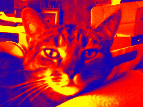 pets cat kitty