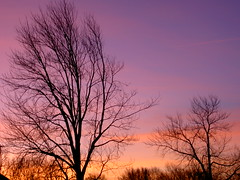 Colorful Winter Sunrise (FOTOGRAFIA.Nelo.Esteves) Tags: morning trees winter orange usa colors beautiful yellow sunrise wow wonderful dawn us newjersey am interestingness amazing cool nice fantastic perfect colorful purple unitedstates superb gorgeous branches great nj peach 2006 explore stunning jersey monmouthcounty bayshore dimageg600 gardenstate konicaminolta unionbeach views800 20060123 2006mysinglebestshot neloesteves colorfulwintersunrise zip07735 fcsetsrises