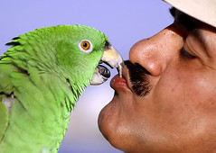 Love (Ammar Alothman) Tags: 2005 friends portrait people man color green bird love nature face birds animal animals fun nikon flickr gulf d70s romantic kuwait kuwaitcity kw q8 sigma105   3mmar  kuwaitvoluntaryworkcenter