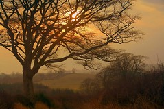 Misty morning (Ray Byrne) Tags: uk england tree rural canon wow landscape 350d countryside bravo unitedkingdom britain country north alnwick northumberland canon350d gb northern northeast landscapephotography denwick raybyrne byrneout