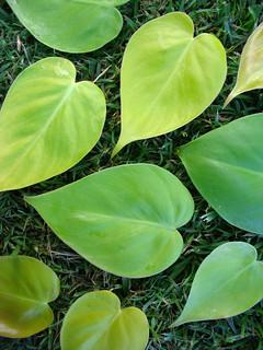 valentine leaves