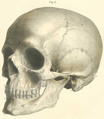 The bones of the skull, lateral view. (Knowledge Collector) Tags: vintage illustrations medical anatomy