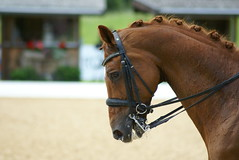 Wolkenritter (Theresa Pagitz) Tags: horse cheval cavallo pferd equestrian equine dressage dressur schindlhof musikkr