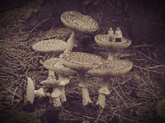 Stuck in the middle (of a toadstool) with you (WatermelonHenry) Tags: old red mushroom sepia woodland fly woods forrest toadstool trippy agaric poisonous undergrowth pentioner originalfilter