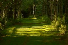 Glyn Arthen: Llwybr y coed / Woodland path (FfotoMarc) Tags: park sunset summer wales landscape woods path cymru unretouched coed haf machlud welshflickrcymru hawlfraintmarcevans2015
