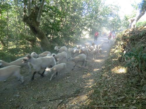 Fotografía Paquita Valdi Marcha 391 27 y 28 de Junio Parque Natural de la Encina de Lastra Ourense (9)