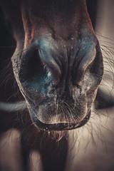 You (MiuMiuKitty) Tags: horses horse beautiful beauty equestrian horselover красиво лошадь лошади horseworld horselife equestriansport ilobsterit horsesworld horseslife конныймир