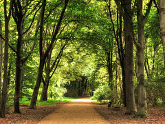 Tiergarten Berlin (Habub3) Tags: park berlin nature forest canon germany deutschland natur powershot wald tiergarten g12 2015 habub3