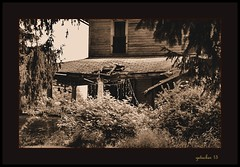 Decay on a Country Road Sepia (the Gallopping Geezer '5.0' million + views....) Tags: house building abandoned home rural canon decay country structure faded worn weathered backroads derelict decayed geezer corel gravelroad 6d dwelling 2015 tamron28300