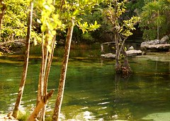 1-DSC00671 (mariaschivster) Tags: tree nature water del mexico maya funtime playa cenote tropic cancun carmen roo quintana translucid naturelover