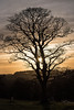 Tuesday 27th Dec 2016 (Bon Espoir Photography) Tags: sunset tree silhouette sky clouds 27thdecember park lymepark cheshire england nationaltrust nikond750