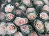 Friday, 6th, Delicate blooms on the market stall IMG_1590 (tomylees) Tags: chelmsford essex project highstreet market january 2017 6th friday explore
