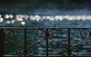 11 gennaio 2017. Roma, Villa Borghese, ringhiera intorno al laghetto (adrianaaprati) Tags: railing banister ringhiera lago bokeh villaborghese roma italy pond laghetto