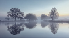 Cool Water (Andrew G Robertson) Tags: bushy park london surrey teddington hampton heron pond dawn mist fog 5d mkiv mk4 canon