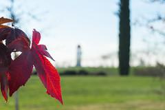 05 (AdrianSanzBer) Tags: nature naturaleza madrid parque otoño autumn hojas leaves trees