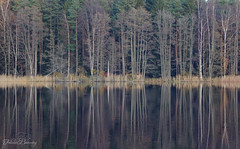 Bare Trees (Felicia Brenning) Tags: bare trees autumn fall forest nature sweden sony